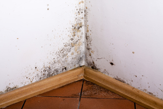 Mold-Inspection-Page