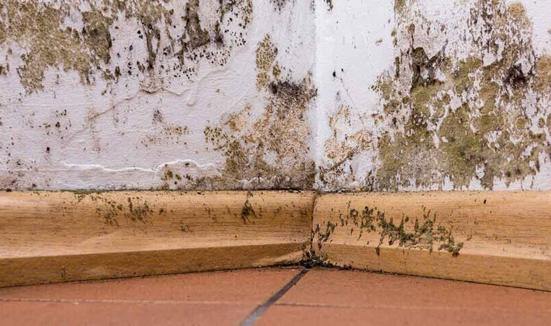 The Good, the Bad, and the Ugly – Residential Mold Remediation