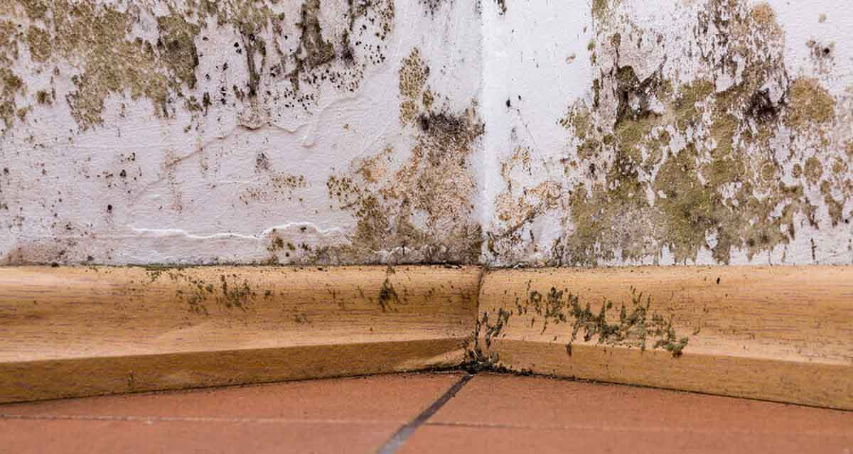 The Good Bad And Ugly Residential Mold Remediation