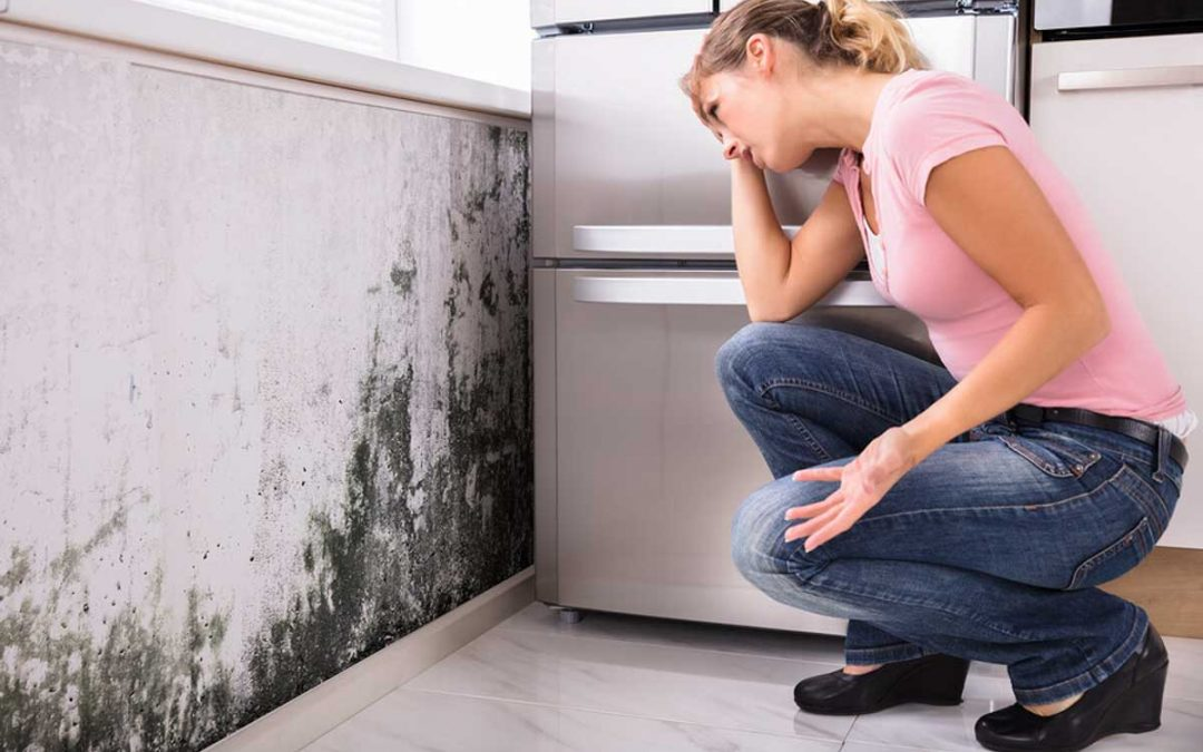 What is Residential Mold Testing?