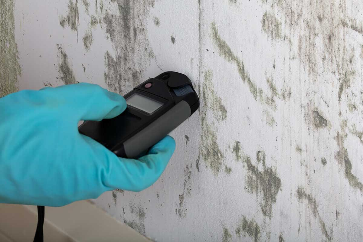 Mold! It's Time to Get Rid of It.