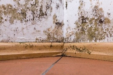 Mold Testing Basics: What Your Family Needs To Know