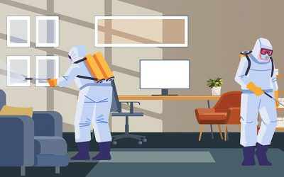 What You Should Know about Mold in Commercial Buildings